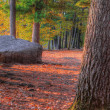 An HDR landscape of a forest and large rock — Stock Photo #40404623