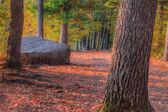 An HDR landscape of a forest and large rock — Stock Photo