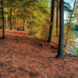 An HDR landscape of a forest and pond. — Stock Photo