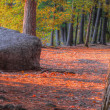 Stock Photo: An HDR landscape of a forest and large rock in soft focus