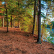 Stock Photo: An HDR landscape of a forest and pond.