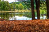 Un paisaje de hdr de un bosque y un estanque. — Foto de Stock