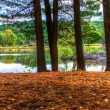 An HDR landscape of a forest and pond. — Stock Photo #41524155