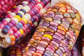 Indian Corn in soft focus — Stock Photo