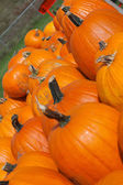 Pumpkins Lined up — Stock Photo