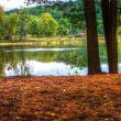 An HDR landscape of a forest and pond in soft focus — Stock Photo