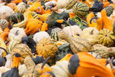 Halloween Gourds — Foto Stock