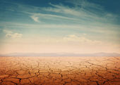 Woestijn — Stockfoto