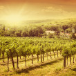 Vineyards landscape - Stock Photo