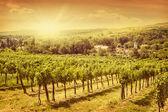 Vineyards landscape — Stock Photo