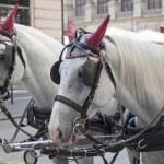 Traditional horse coach Fiaker — Stock Photo