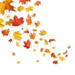 foglie che cadono d'autunnali — Foto Stock