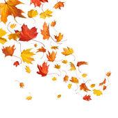 Las hojas de otoño cayendo — Foto de Stock