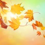 Autumn falling leaves — Stock Photo #13949863