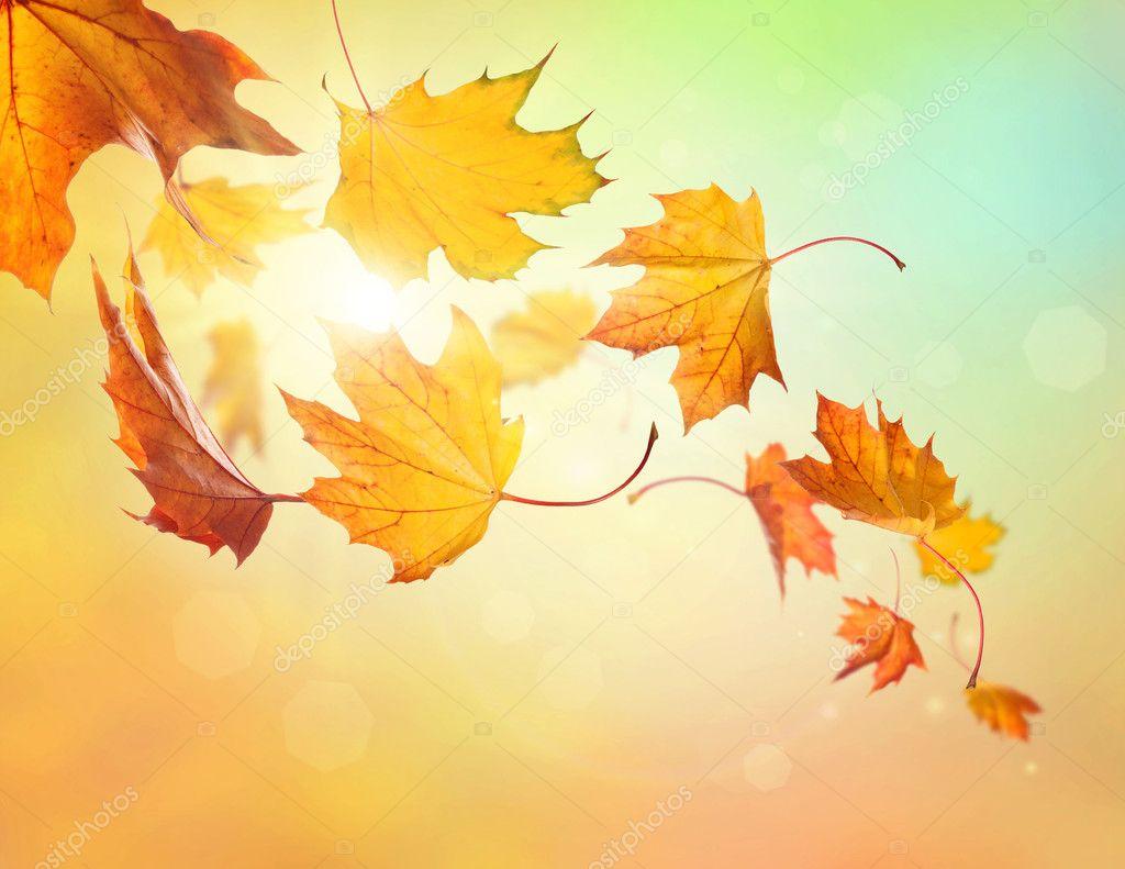 Las hojas de oto o cayendo fotos de stock 13949863 - Descargar autumn leaves ...