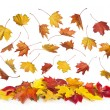 Stock Photo: Autumn falling leaves