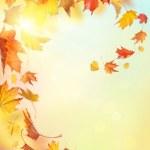 Autumn falling leaves — Stock Photo