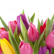 Tulip flowers — Stock Photo #18809093