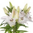 White lily flowers - Stock Photo