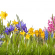 Spring flowers — Stock Photo #23681263
