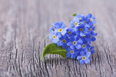 Forgetmenot flowers — Stock Photo