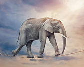 Elephant on a tightrope — Stock Photo