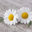 Chamomile flower — Stock Photo #24451779