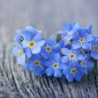 Forgetmenot flowers - Stock Photo
