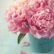 Stock Photo: Peony flowers