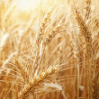 Wheat field — Stock Photo #28712953