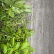 fresh herbs — Stock Photo #29035973