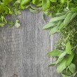 fresh herbs — Stock Photo #29036047
