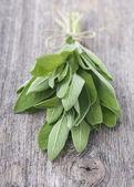 Fresh Salvia — Stock Photo