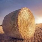 Round bales of straw  — Stock Photo #29324071