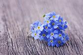 Forgetmenot flowers — Stock Photo