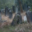 Old jewish cemetery — Stock Photo #32804677