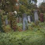 Old jewish cemetery — Stock Photo #32804797