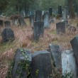 Old jewish cemetery — Stock Photo #32804949