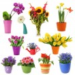 Flower collection — Stockfoto
