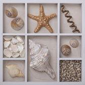 Seashells in a white box — Stock fotografie