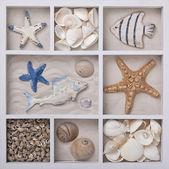 Conchas en una caja blanca — Foto de Stock