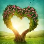 Heart shaped tree — Stock Photo