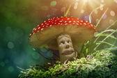 幻想蘑菇 — 图库照片