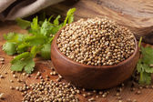Coriander — Stock Photo