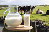 Dutch milk — Stock Photo
