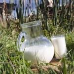 Cow milk — Stock Photo