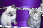 Adorable kittens — Stock Photo