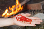 Delicious lobster — Stock Photo