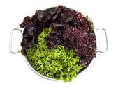 Healthy bio salad — Stock Photo