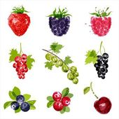 Fruit set 1 — Vector de stock